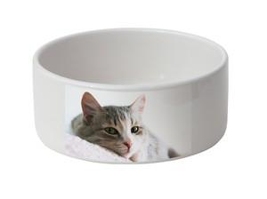 Gamelles pour chat