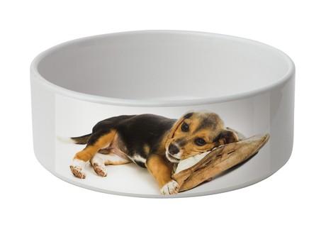 Gamelle pour chien